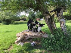Working Collies #dogs #collie #countryside #workingdogs