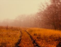 Road to fog by Natalia Flora on 500px