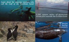 Farallones Marine Sanctuary Association protecting our ocean wilderness through public stewardship