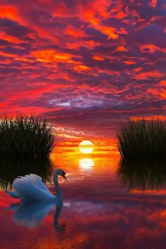 Take a look at these amazing Nature photos and videos 💕 💋