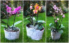 Kreative Mitbringsel aus Beton: Zarte Orchideen - massiver Beton