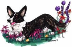 Welsh Corgi Cardigan Caricature