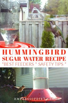 How to make hummingbird nectar for your feeder using sugar and water in the right ratios to keep it safe and healthy. #birdfeeder #hummingbirds #empressofdirt