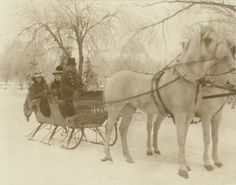 Sleigh riding in Tower Grove Park. (1900) ©Missouri History Museum