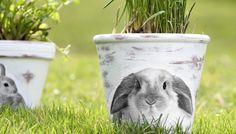 Tady máte jednoduchý návod, jak dostat obrázek nalezený na internetu a vytištěný na běžný kancelářský papír elegantně na květináč :-) Painted Flower Pots, Hand Painted, Flowers, Animals, Animales, Animaux, Animal, Animais, Royal Icing Flowers