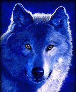 wolf as spirit animal | BLAGUES SARKO