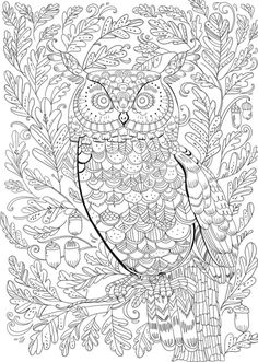 Pimlada Phuapradit - Owl