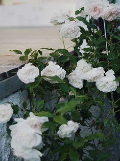 Work Travel, Rose, Garden, Plants, Pink, Garten, Lawn And Garden, Gardens, Plant