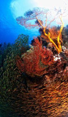 By Scotty Graham...Indonesia, Lombok, underwater