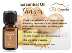 Ginger Essential Oil #Mtsapola #Aromatherapy #essentialoilginger #gingeroil Ginger Essential Oil, Essential Oils, Mental Strength, Stretch Marks, Aromatherapy, Anti Aging, Essentials, Personal Care, Pure Products