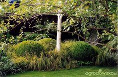 Galeria zdjęć - Chelsea Flower Show 2004 - 2005 - Ogrodowisko