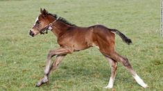 In retirement, Frankel has gone to stud, earning £125,000 ($210,000) for every mare that produces a foal from him.