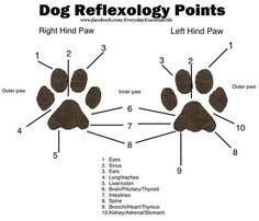La reflexologie pour les animaux