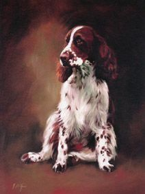 English Springer Spaniel Limited Edition Dog Print by Canine Artist Jacqueline Stanhope Chien Springer, Springer Spaniel Puppies, English Springer Spaniel, Havanese Dogs, Pet Dogs, Doggies, Spaniel Breeds, Dog Breeds, Beautiful Dog Pictures