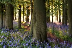 H006 - Dockey woods, Hertfordshire