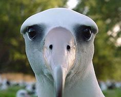 Laysan albatross homosexuality and christianity