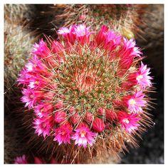 ¡Que no se te muera el cactus! - Blogs lanacion.com