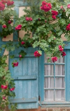 Charming blue shutters are tucked away by gorgeous flowers in the French countryside.