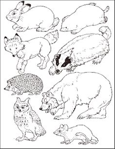 """Put the animals in the Mitten.free printable by Jan Brett to go with her book, """"The Mitten"""". Have the students color the animals and then use them for the mitten craft!"""