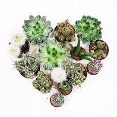 unexpected tenderness #cactus #green #heart