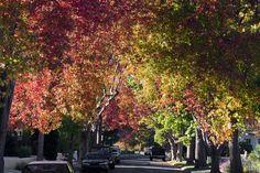 Downtown Burlingame | Burlingame California: Homes and Real Estate in Burlingame California ...