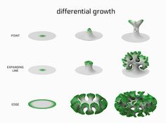 Jessica Rosenkrantz. differential growth diagram