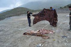 Un cachalote ahogado en plásticos   Fotogalería   Sociedad   EL PAÍS