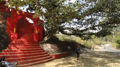 Mount Abu Trekking – Living to Learn, Learning to Live Mount Abu, Grand Staircase, Staircases, Trekking, Trees, India, World, The World, Stairs