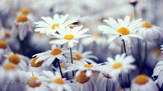 spirit of nature #flowers