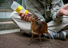 kleine baby dieren - Google zoeken