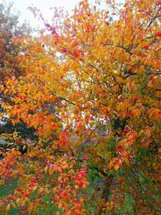 Apple Tree in fall | ... trees especially suitable for smaller gardens in spring the whole tree