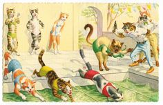 Mainzer Cats - bathing beauties vintage postcard | Flickr -