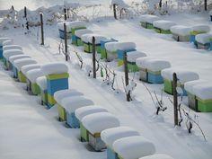 На пасеке в январе. В этом году северо-восток Украины сильно замело.