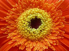 Macro Yerbera Naranja y Amarilla by rulicamweb, via Flickr