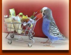 Great Treats for Your Pet Bird