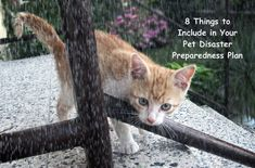 8 Things to Include in your Pet Disaster Preparedness Plan #pet #disaster #emergency #petsafety Funny Cat Images, Funny Cat Videos, Funny Cat Pictures, Funny Cats, Pet News, Cute Kittens, Cat Health, Pet Care, Baby Animals