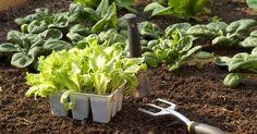 Profitez des beaux jours de mai pour mettre en place votre potager et cultiver les légumes qui aiment les températures fraîches.