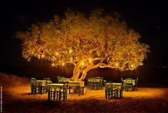 A Greek tavern under the tree in plaka beach Naxos island, Greece. Midnight Summer Dream, Places Around The World, Around The Worlds, Naxos Greece, Mykonos Greece, Corfu, Golden Tree, Greece Holiday, Greek Isles