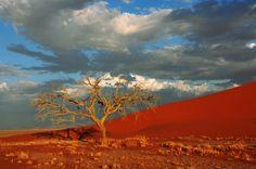Dune 45 Sossusvlei. Namibia