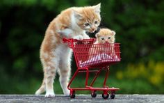 Kitten Pushing an Even Smaller Kitten in a Tiny Shopping Cart