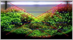 photo http://www.aquariophilie.org/images/article/Mise_en_route_et_evolution_d_un_bac_plante_a04272104_14.jpeg