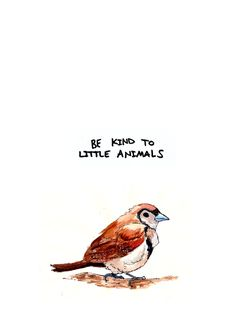 Be kind to little animals (Please)