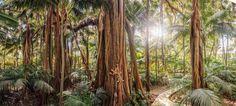 Arajilla Resort & Spa - Lord Howe Island Australia