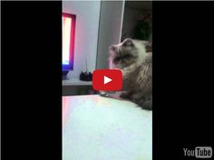 This Bad Cat Might Possibly Be The Worst Bad Cat
