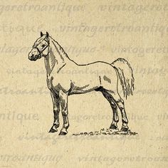 Printable Graphic White Pony Stallion Horse Image Illustration Download Digital Vintage Clip Art. High resolution digital graphic. This high quality printable digital image download works well for making prints, fabric transfers, and much more. Great for use on etsy items. This image is high quality, large at 8½ x 11 inches. A Transparent background png version is included.