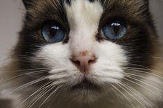 Noska - OGQ Backgrounds HD So cute !!!!!!! ♥♥♥♥♥♥♥♥♥♥ love that eyes ♡♡♡♡♡♡♡