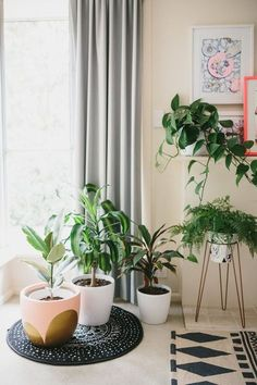 decorating with nature | living room plants, hanging plant and