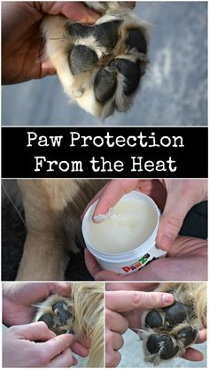 Pavement, sand and other surfaces can become hot enough to cause burns to your dogs paws. Using a balm like Pawz Max Wax will form a protective layer to help keep them safe!