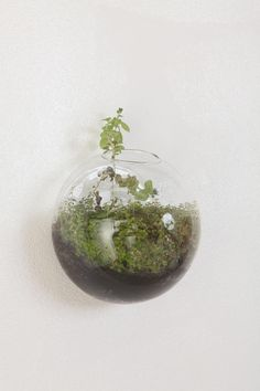 This bubble vase is PERFECT for a terrarium. Love it. #urbanoutfitters
