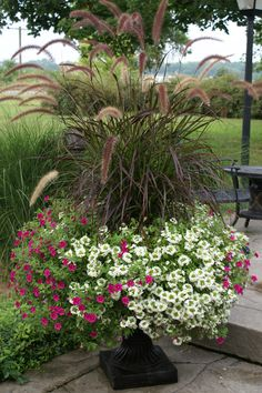 More great combinations @ smithscountryg Outdoor Planters, Garden Planters, Container Plants, Container Gardening, Flower Containers, Fountain Grass, Easy Fence, Neon, Ornamental Grasses